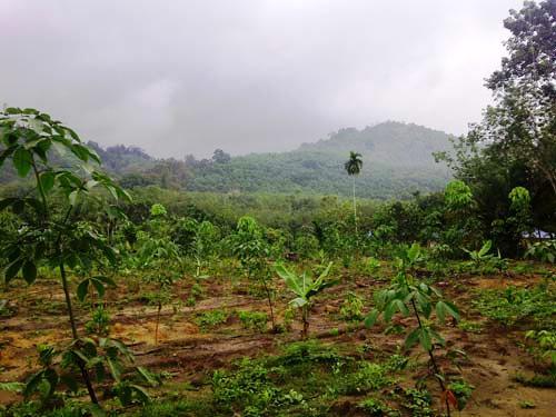 GUP Bukit Payung (4)