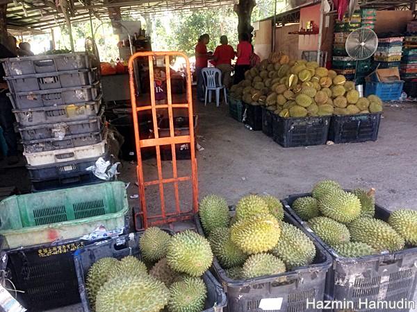 Durian Udang Merah Mantin Penipu